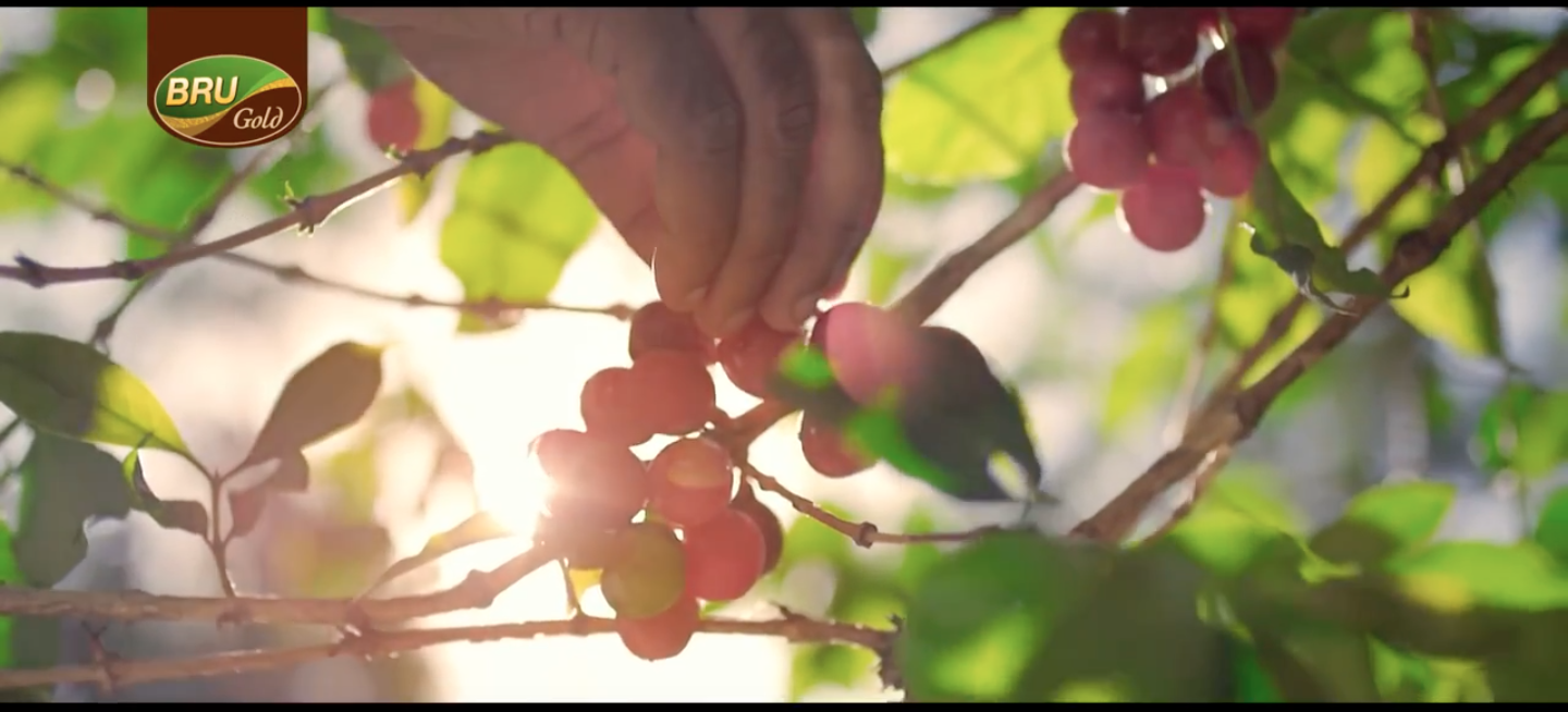 ARTIFICIAL COFFEE BERRIES FOR BRU TVC